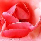 Pink Petals by Ingrid Funk