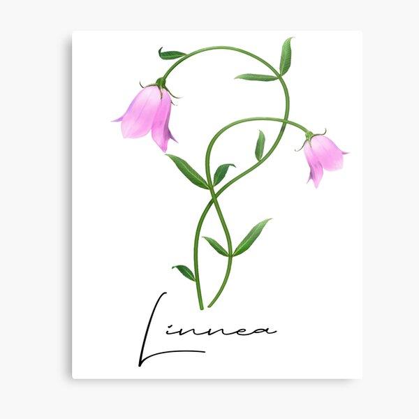 Nordic Wildflower Linnea Twinflower Pretty Pink Flowers floral Metal Print