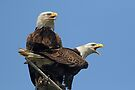 Eagle Parents by WorldDesign