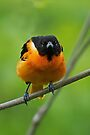 The Baltimore Oriole Look by WorldDesign
