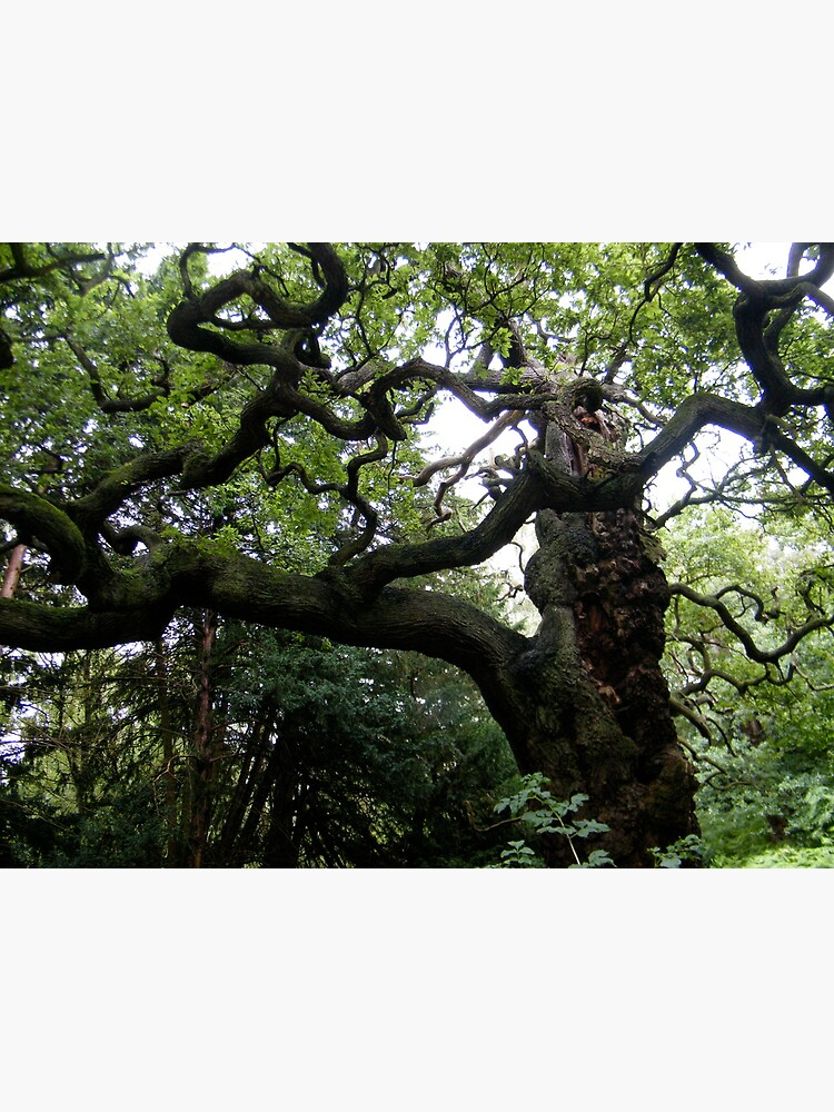 Sherwood Forest 1 by robsteadman