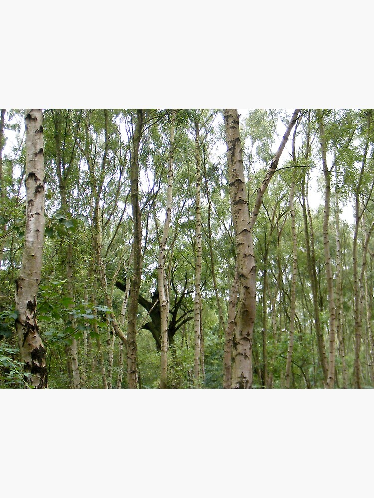 Sherwood Forest 3 by robsteadman