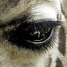 Giraffe-Eye by Savannah Gibbs