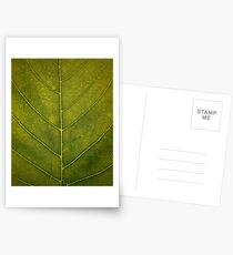 Leaf - HD Nature Postcards