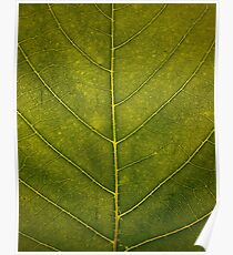 Leaf - HD Nature Poster