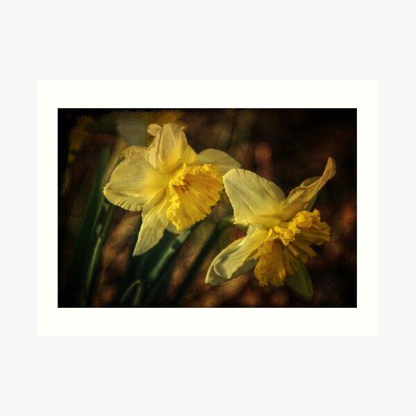 Daffodil Afternoon Art Print
