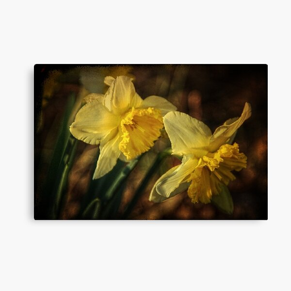 Daffodil Afternoon Canvas Print
