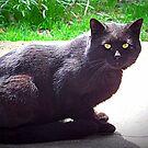 Black Cat by Sheri Nye