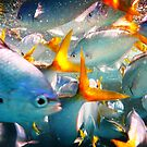 Just Fish - The Great Barrier Reef by Roger Hodkinson