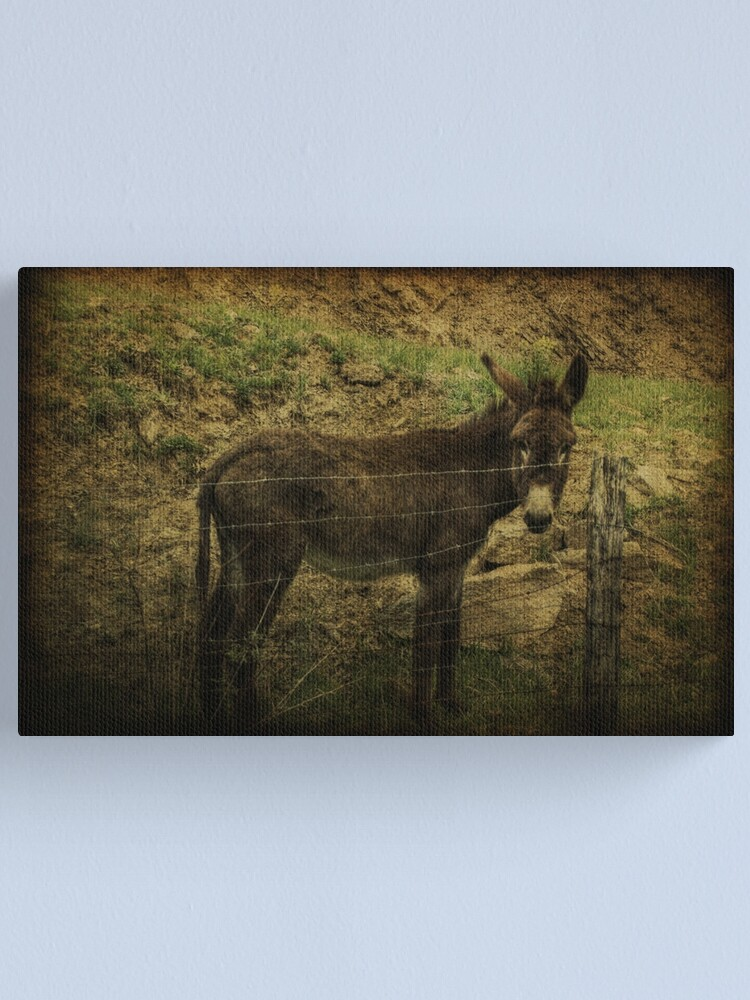 Alternate view of If Not For the Barbed Wire Fence Canvas Print