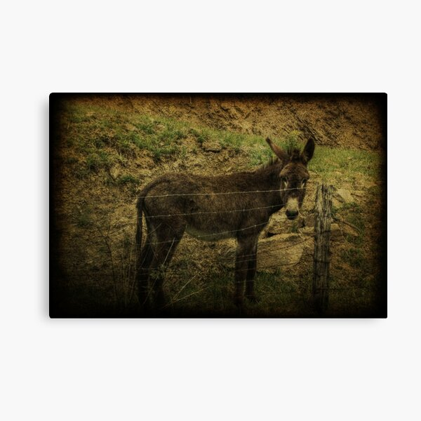 If Not For the Barbed Wire Fence Canvas Print