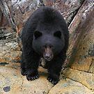 Bear Rock by Martin Smart