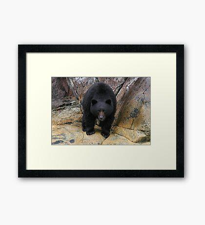Bear Rock Framed Print