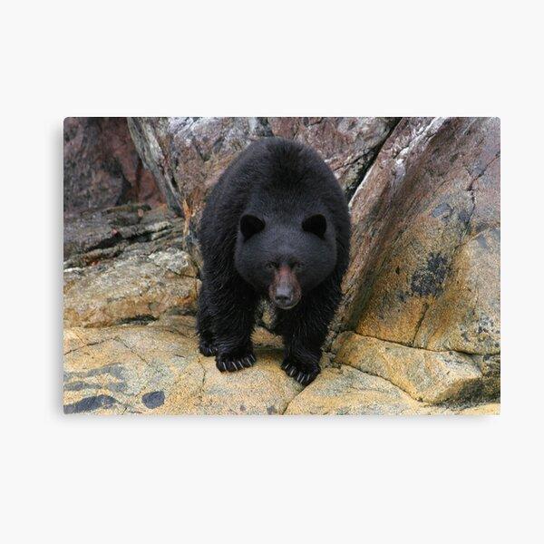 Bear Rock Canvas Print