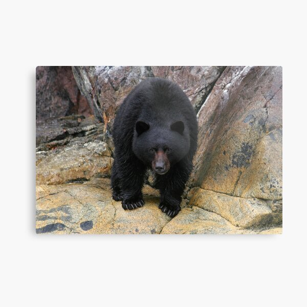 Bear Rock Metal Print
