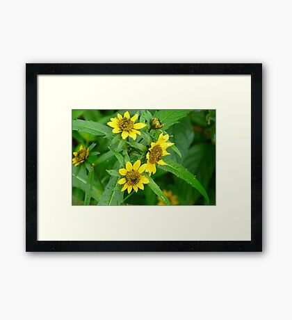 Swamp 'Sun Flowers' Framed Print