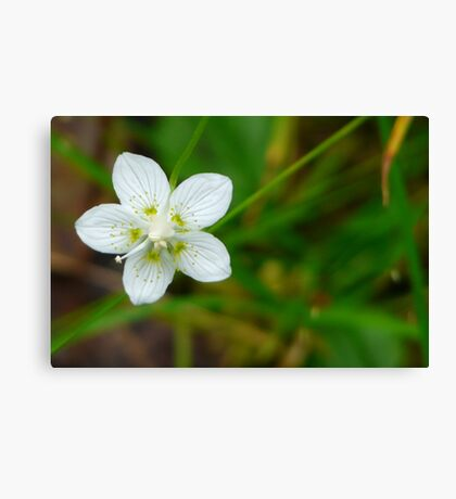 Make A Wish Upon A Star...Flower That Is. Canvas Print