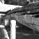 Fagan Park- Old fence. by BecQuist