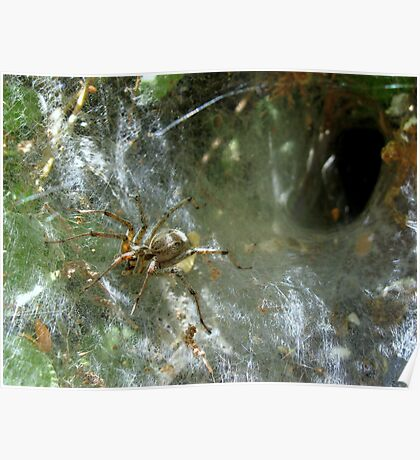 Funnel Web Spider ~2 Poster