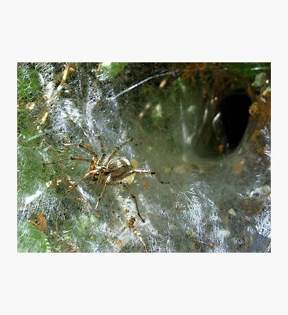 Funnel Web Spider ~2 Photographic Print