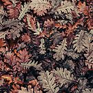 Dried Autumn Leaves - HD Nature by Bumcchi