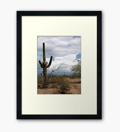 Sonoran Desert Scene Framed Print