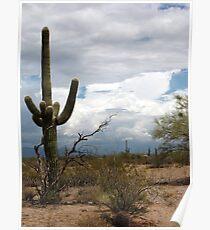 Sonoran Desert Scene Poster