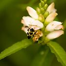 Buzzing by Sean McConnery