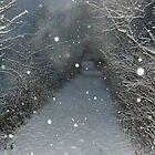 Fog blurs the top of a treed archway by Gaetan