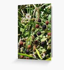 Blackberries and flower on San Juan Island in August Greeting Card