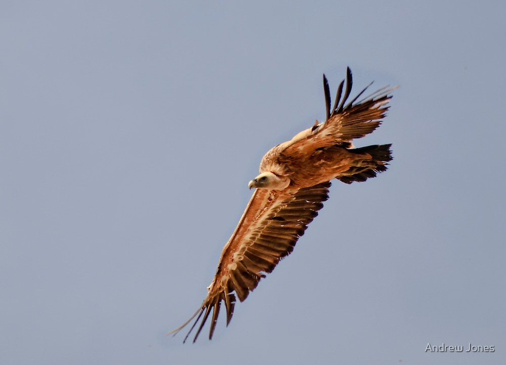 soaring by Andrew Jones