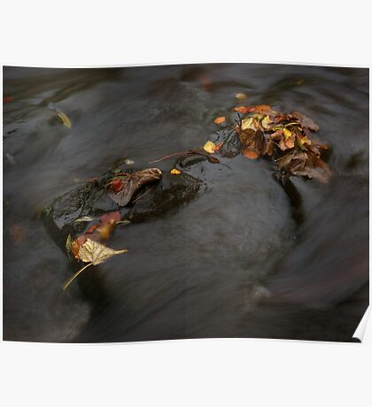 river in autumn I Poster