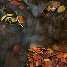 river in autumn III by Dave Milnes