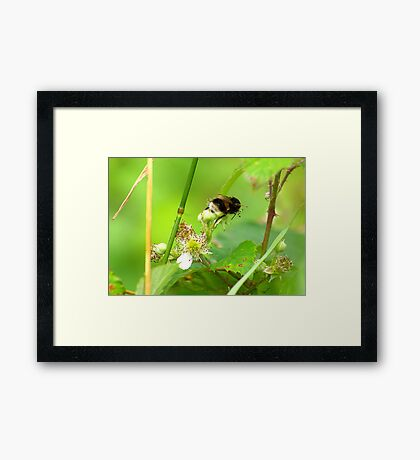 Bee #1 Framed Print
