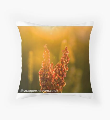 Pink Meadow flowers at sunset from meadow flower collection Throw Pillow