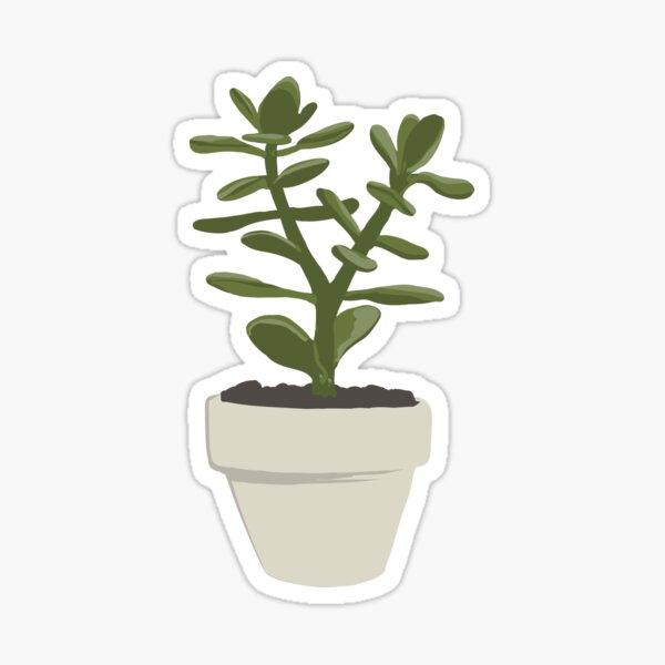 CNS Crassula Ovata Convoluta (Money Plant) Sticker