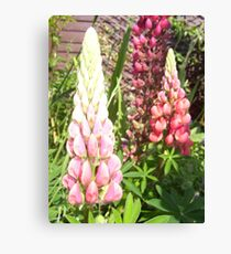 Cottage Garden Lupin Canvas Print