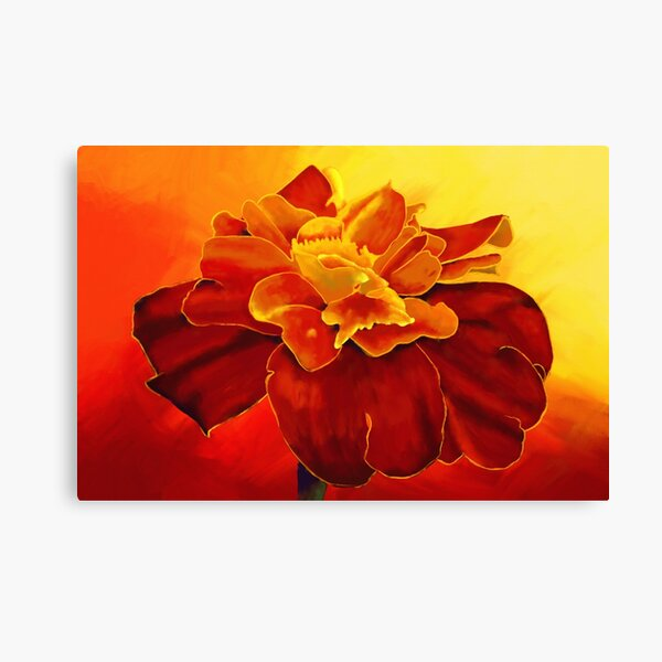 Painting of a Marigold flower in yellow, orange and red colors Canvas Print