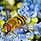 Pollination 6 by Gareth Jones