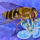 Pollination 7 by Gareth Jones