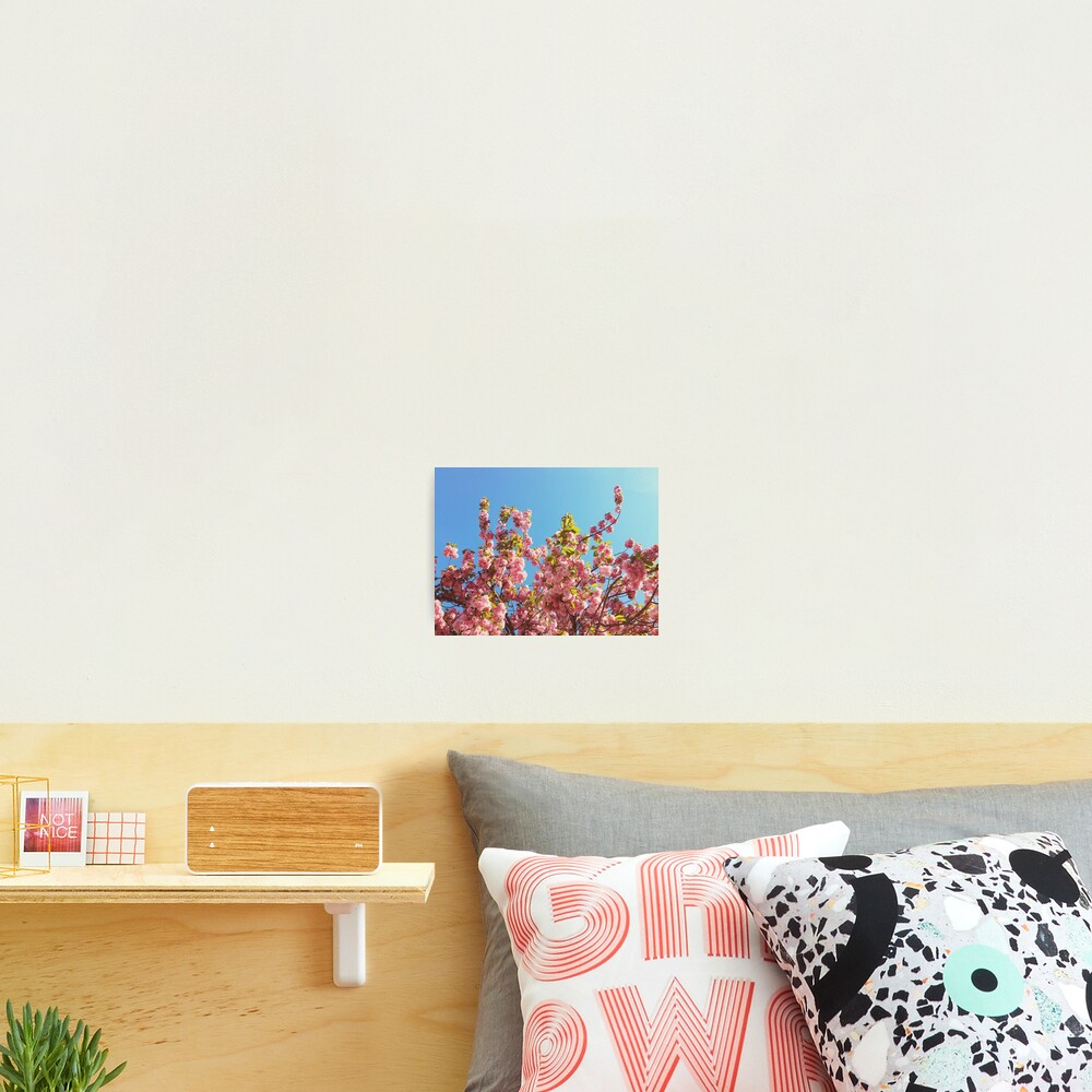Floral Gift - Cherry Blossoms Photography - Gardener Present Photographic Print