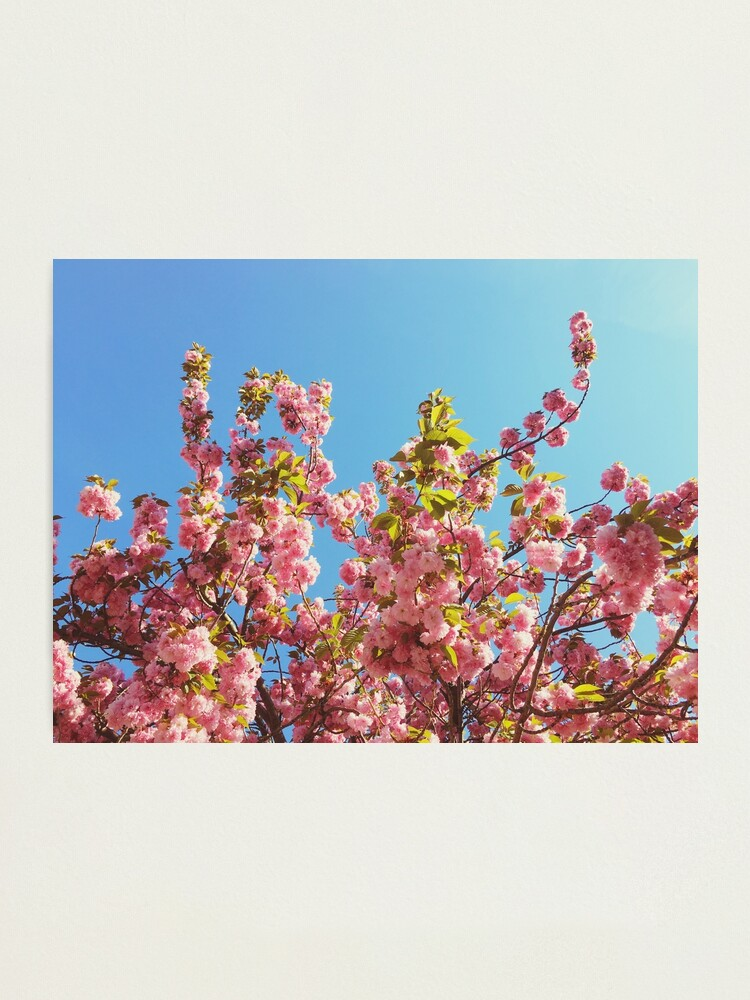 Alternate view of  Floral Gift - Cherry Blossoms Photography - Gardener Present Photographic Print