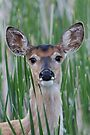 Deer in the Cattails by WorldDesign