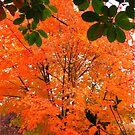 Japonese maple by Dale Lockridge