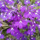 Purple flowers by Yulianna-ca