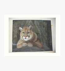 Cougar surveys his world Art Print