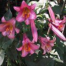 Trumpet Lily by Dale Lockridge