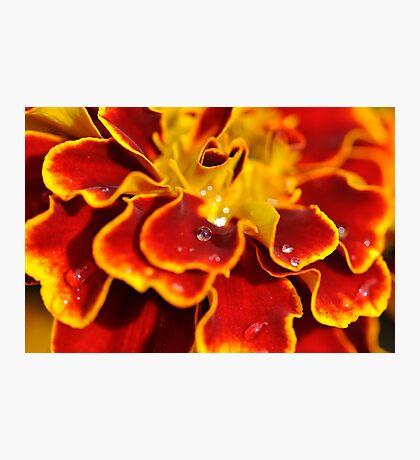 Colour explosion Photographic Print