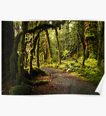 Enchanted Forest - Fiordland National Park Poster
