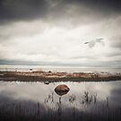« Vedette of the sky » par Philippe Sainte-Laudy